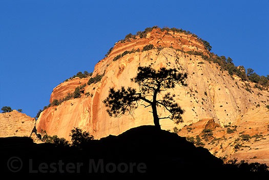LMP-5608-zion-national-park-utah