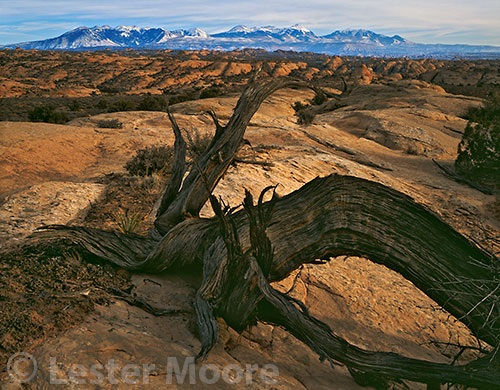 LMP-7294-La-Sal-Mountains-view-Arches-National-Park-UT