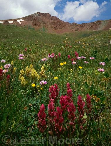 LMP-6178-paintbrush-elk-mountains