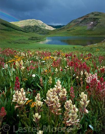 LMP-8761-Paintbrush-Verde-Lakes-Weminuche-Wilderness-CO