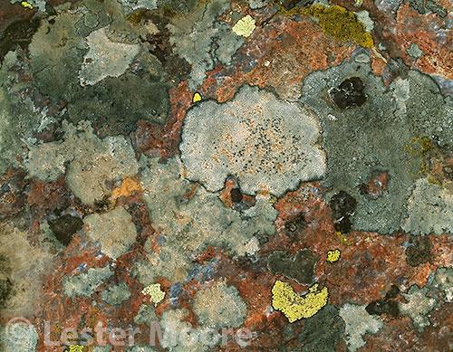 LMP-6804-lichens-weminuche-wilderness-co