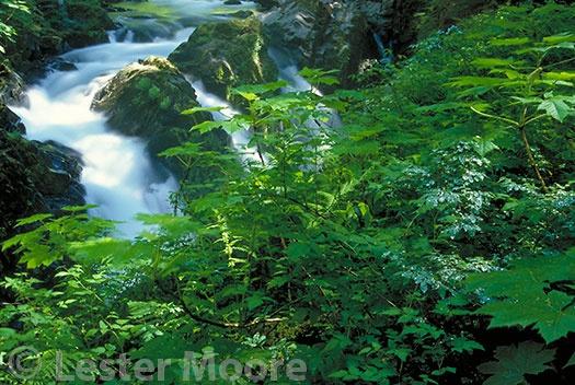 LMP-1164-Sol-Duc-Falls-Olympic-National-Park-WA