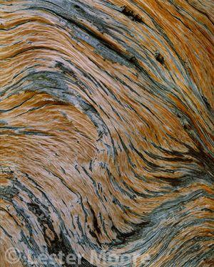 LMP-8663-Dead-Limber-Pine-Mt-Tilestone-RMNP-CO.jpg