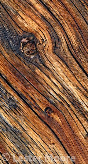 d01760-weathered-tree.jpg
