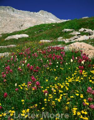 LMP-5194-avens-paintbrush-snowmass-peak.jpg