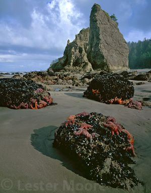 LMP-5751-Olympic-National-Park.jpg