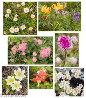 07-22-flower-collage